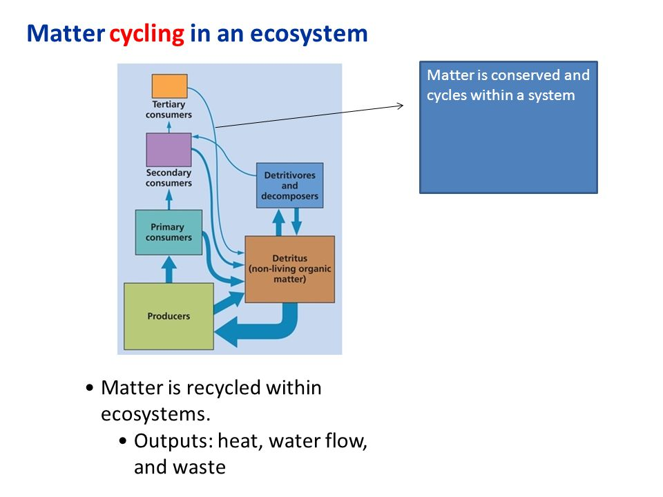 Matter cycling in an ecosystem