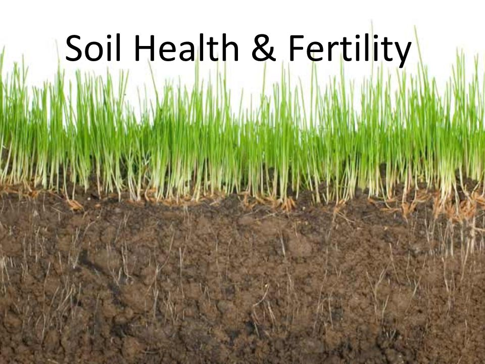 Soil Health & Fertility