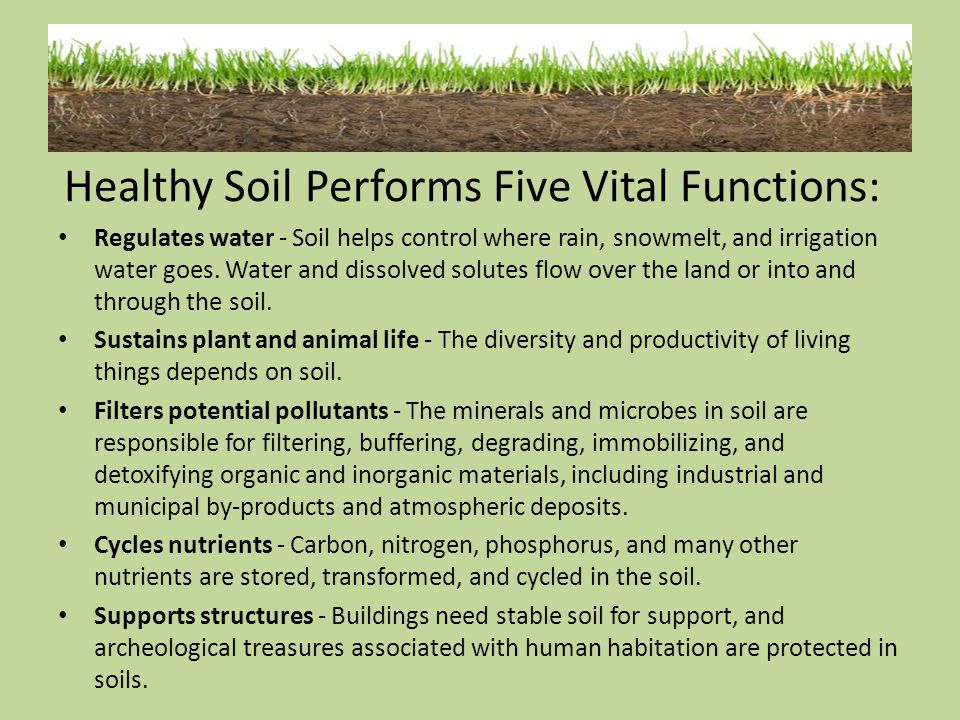 Healthy Soil Performs Five Vital Functions: