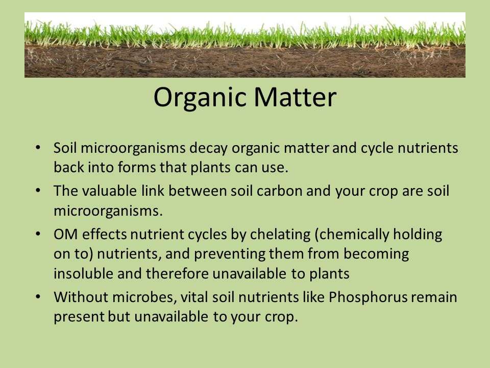 Organic Matter Soil microorganisms decay organic matter and cycle nutrients back into forms that plants can use.