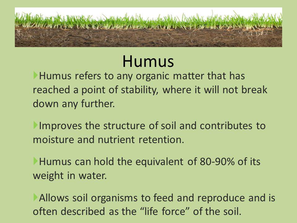 Humus Humus refers to any organic matter that has reached a point of stability, where it will not break down any further.
