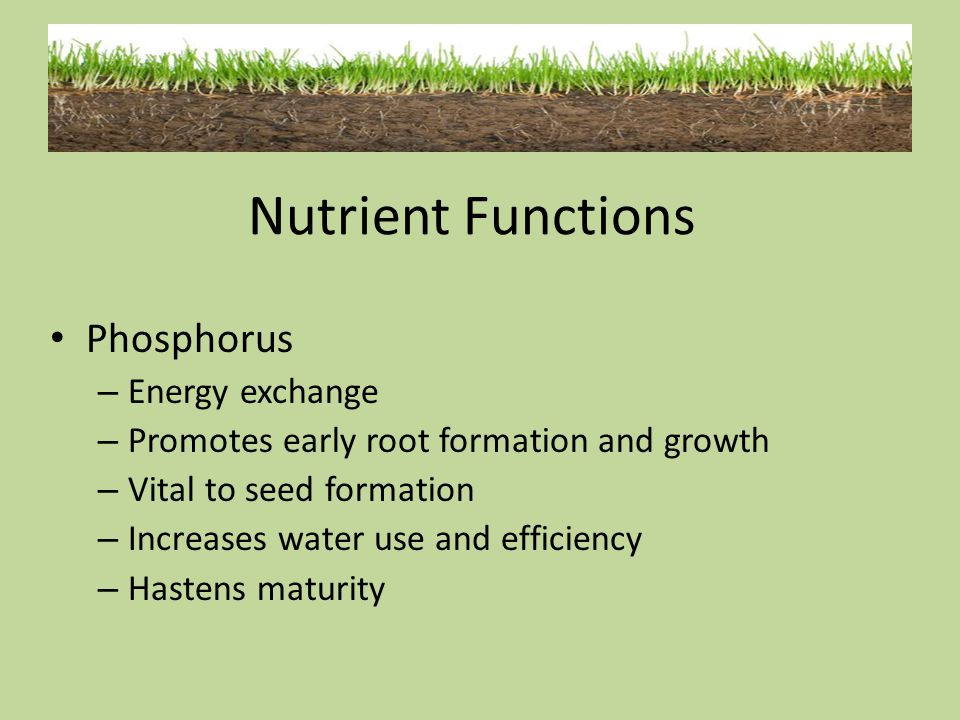 Nutrient Functions Phosphorus Energy exchange