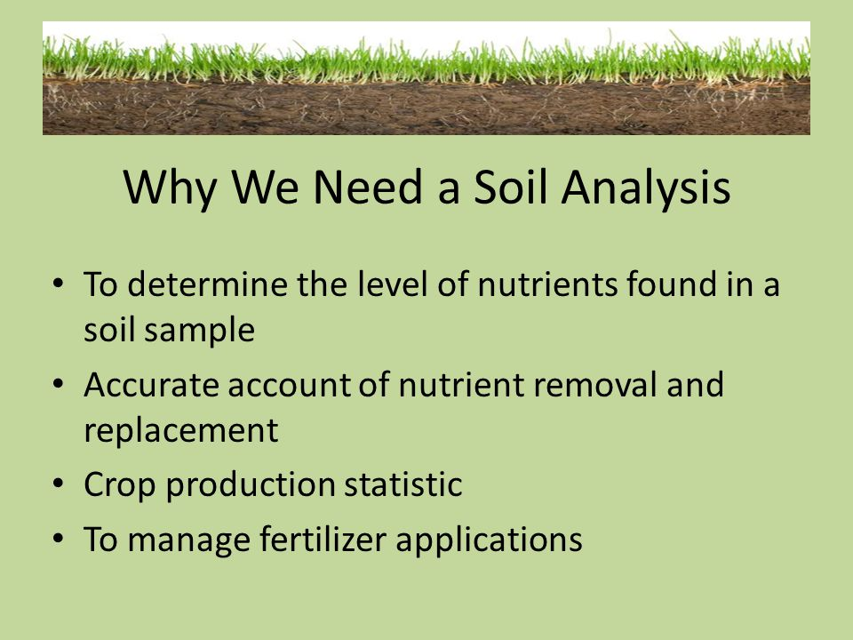 Why We Need a Soil Analysis