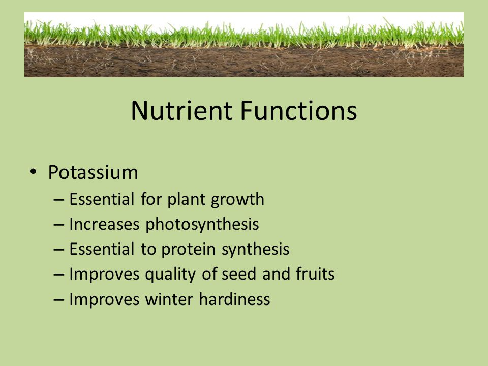 Nutrient Functions Potassium Essential for plant growth