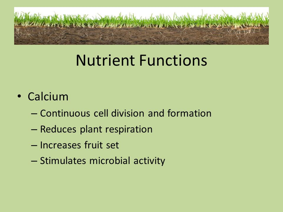 Nutrient Functions Calcium Continuous cell division and formation