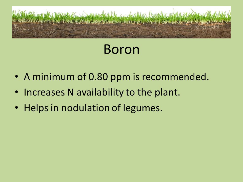 Boron A minimum of 0.80 ppm is recommended.