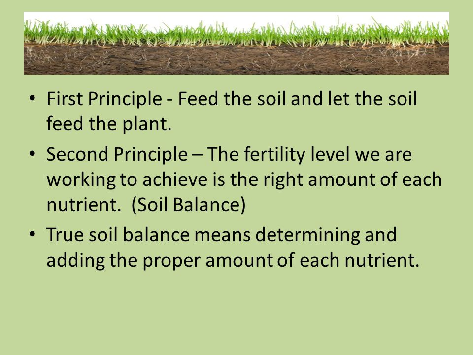 First Principle - Feed the soil and let the soil feed the plant.
