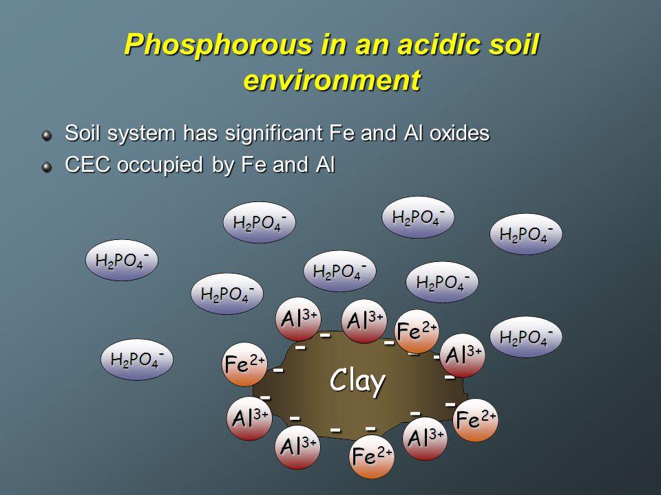 Phosphorous in an acidic soil environment