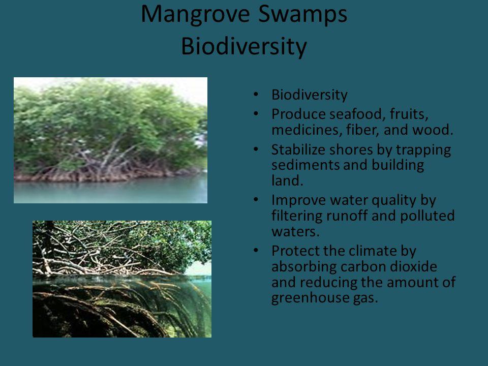 Mangrove Swamps Biodiversity