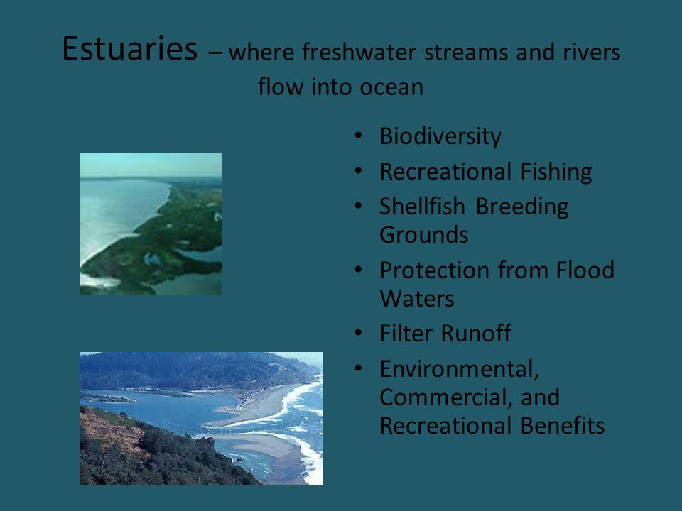 Estuaries – where freshwater streams and rivers flow into ocean