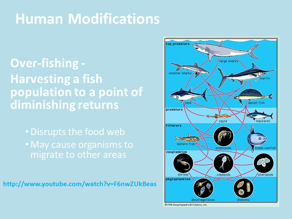 Human Modifications Over-fishing -