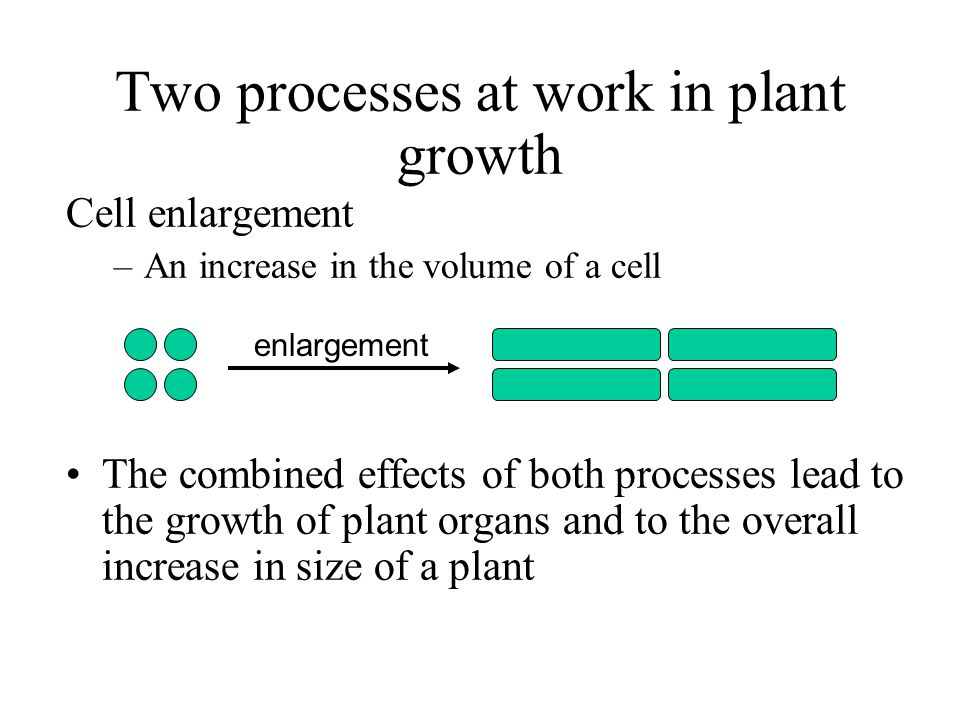 Two processes at work in plant growth