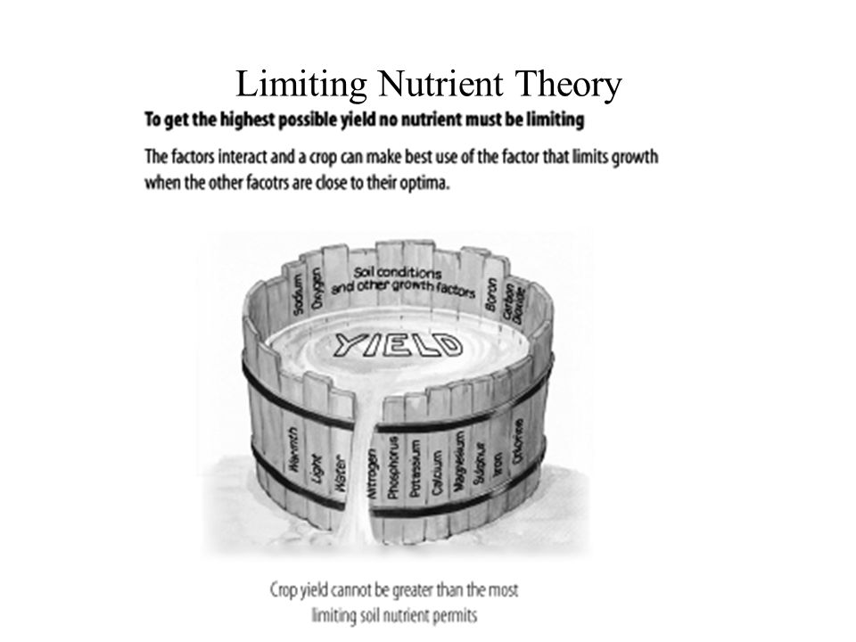 Limiting Nutrient Theory
