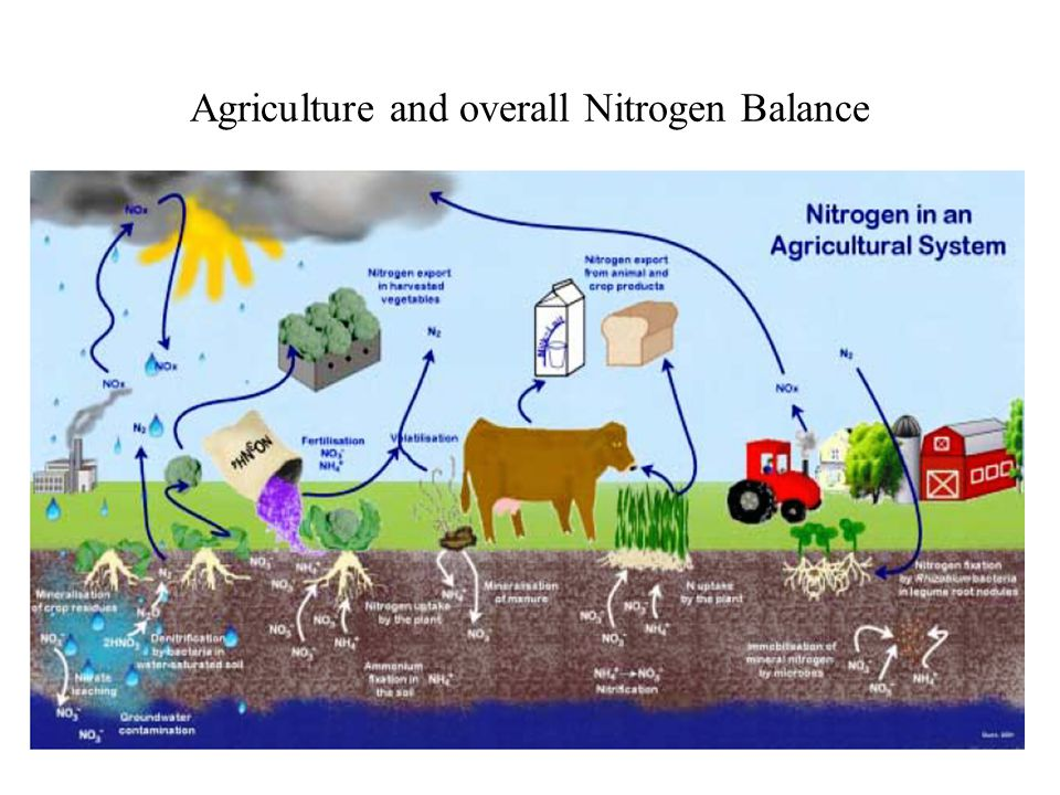 Agriculture and overall Nitrogen Balance