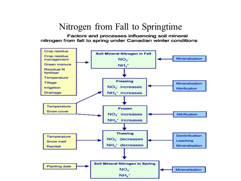 Nitrogen from Fall to Springtime