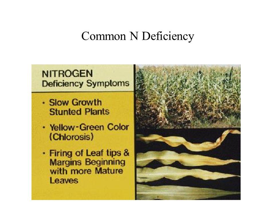 Common N Deficiency
