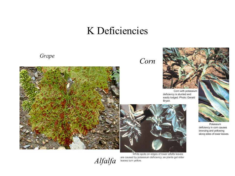 K Deficiencies Grape Corn Alfalfa