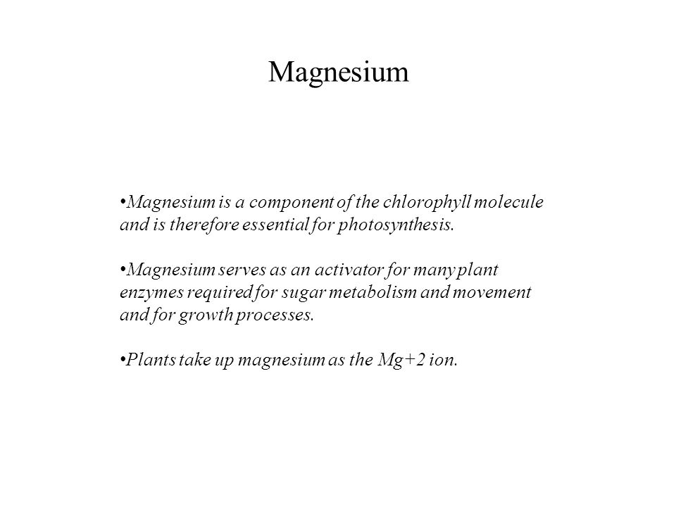 Magnesium Magnesium is a component of the chlorophyll molecule and is therefore essential for photosynthesis.
