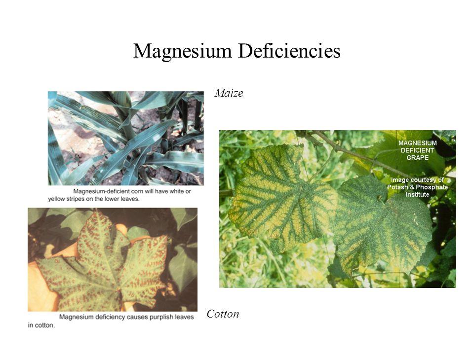 Magnesium Deficiencies