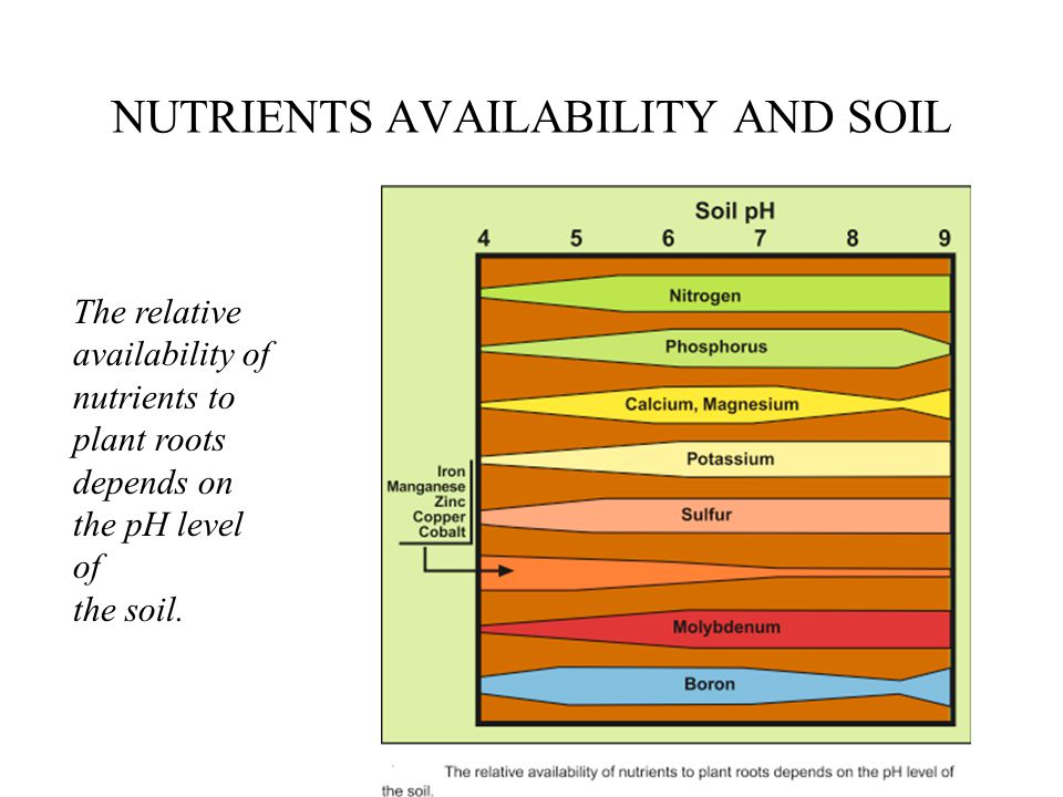NUTRIENTS AVAILABILITY AND SOIL