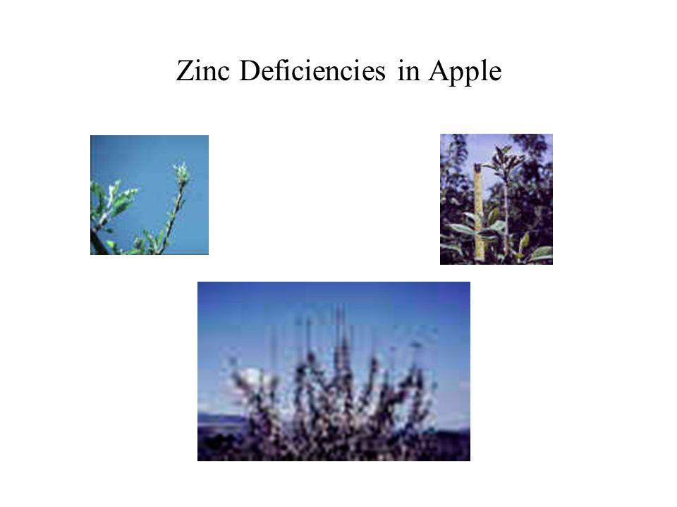 Zinc Deficiencies in Apple