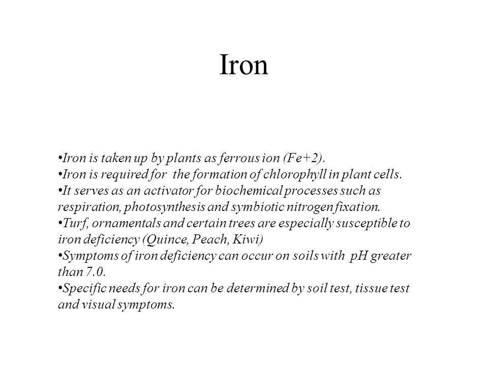 Iron Iron is taken up by plants as ferrous ion (Fe+2).