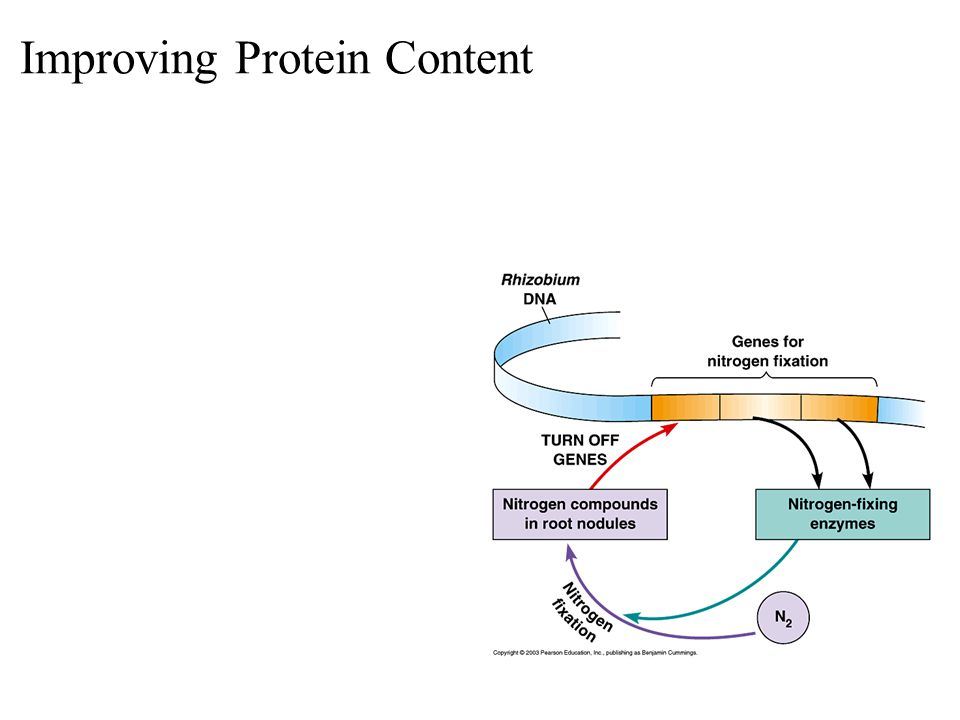Improving Protein Content