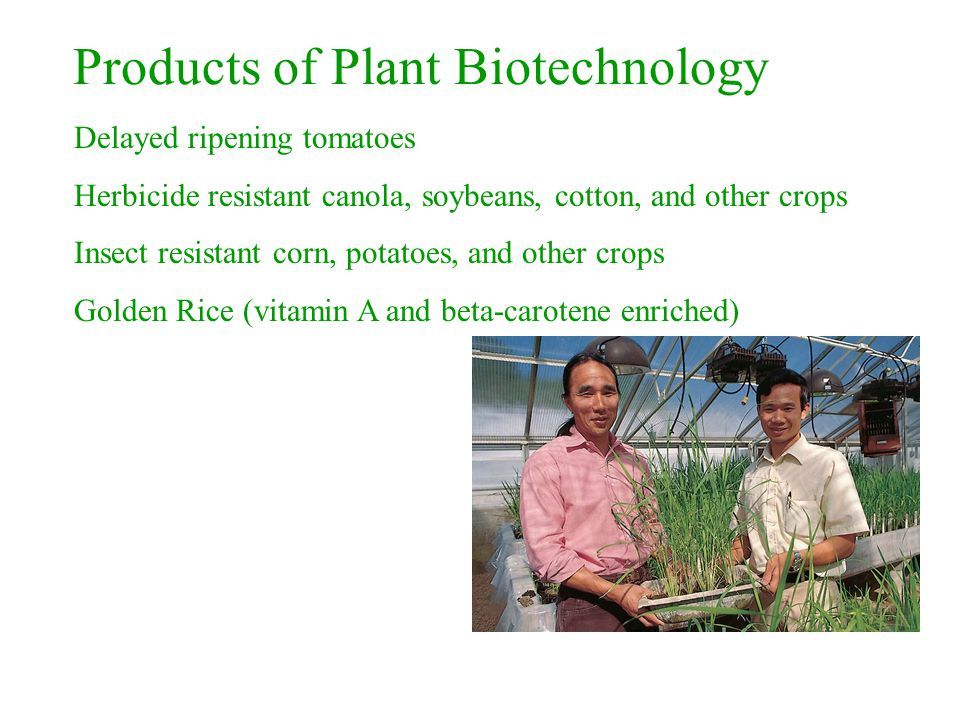 Products of Plant Biotechnology