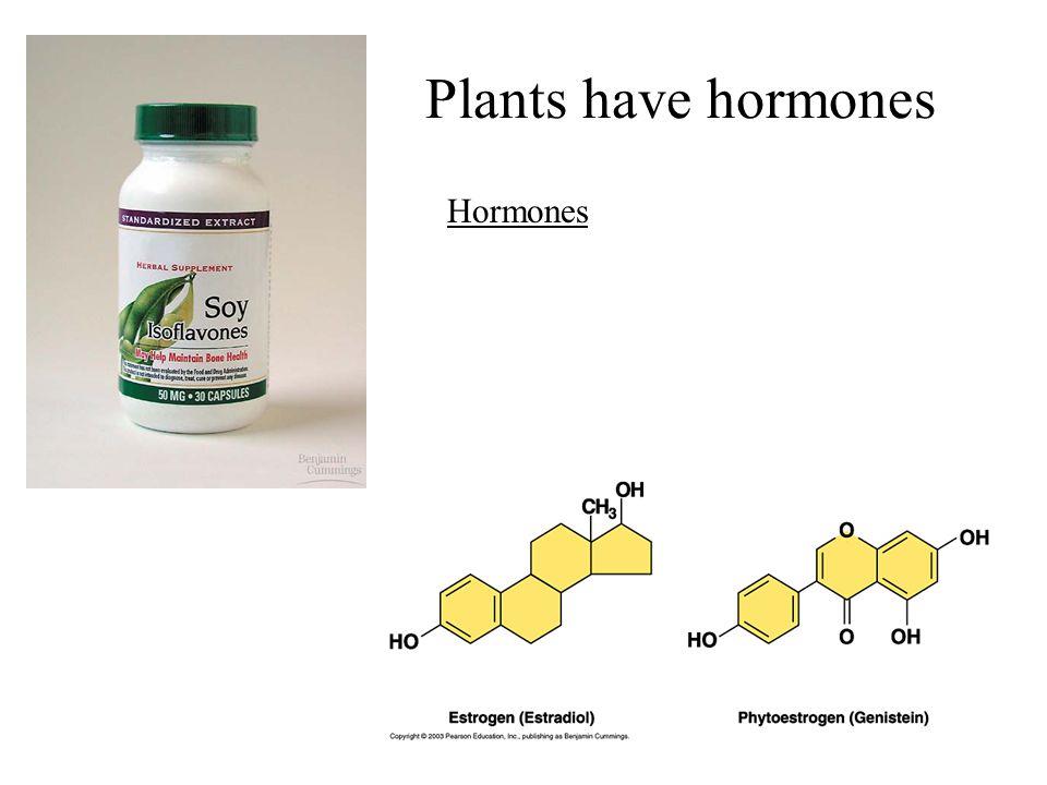 Plants have hormones Hormones