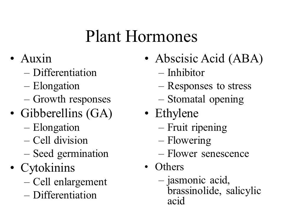 Plant Hormones Auxin Gibberellins (GA) Cytokinins Abscisic Acid (ABA)