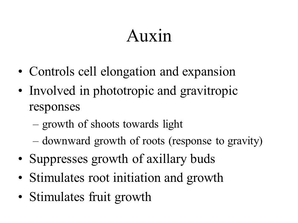 Auxin Controls cell elongation and expansion