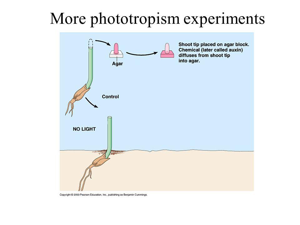 More phototropism experiments