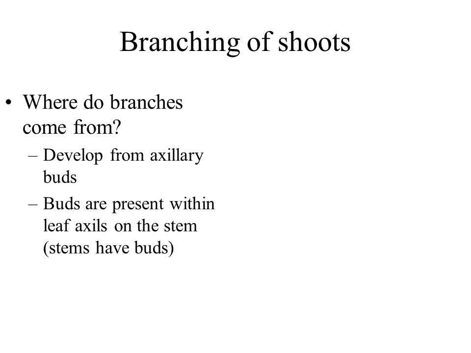 Branching of shoots Where do branches come from