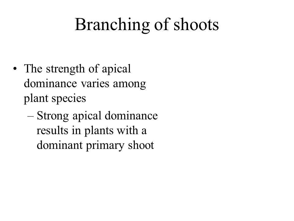 Branching of shoots The strength of apical dominance varies among plant species.