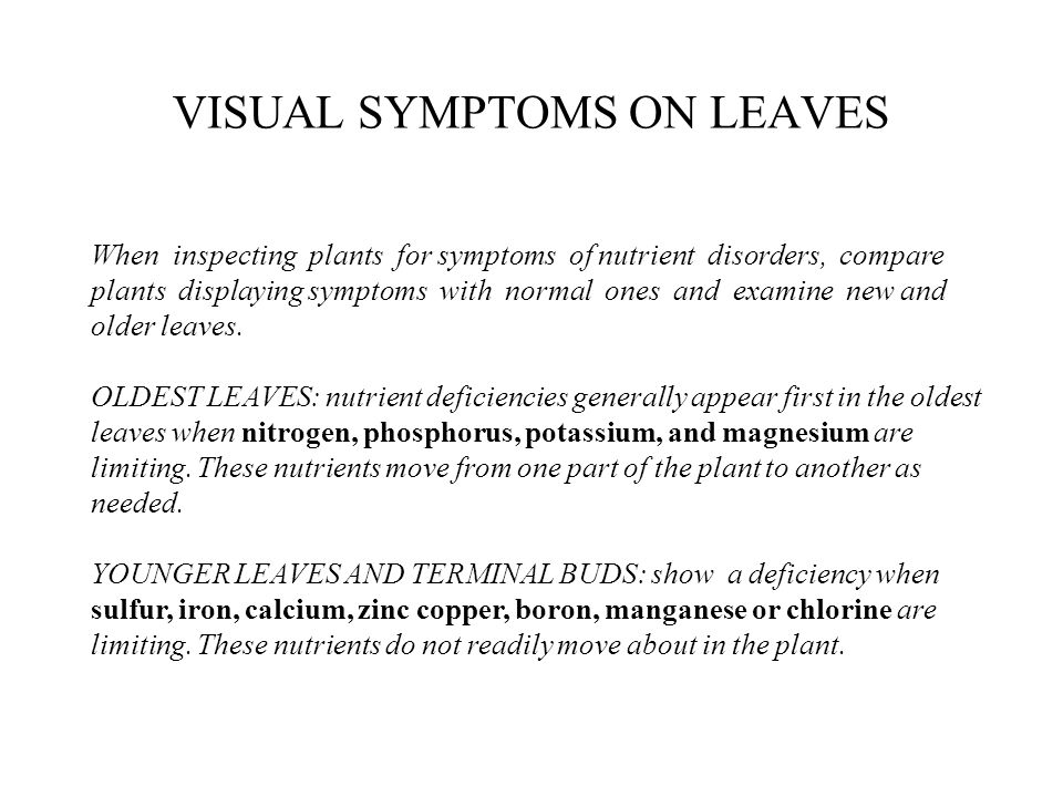 VISUAL SYMPTOMS ON LEAVES