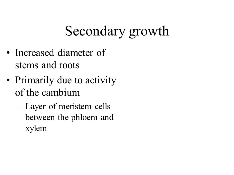 Secondary growth Increased diameter of stems and roots