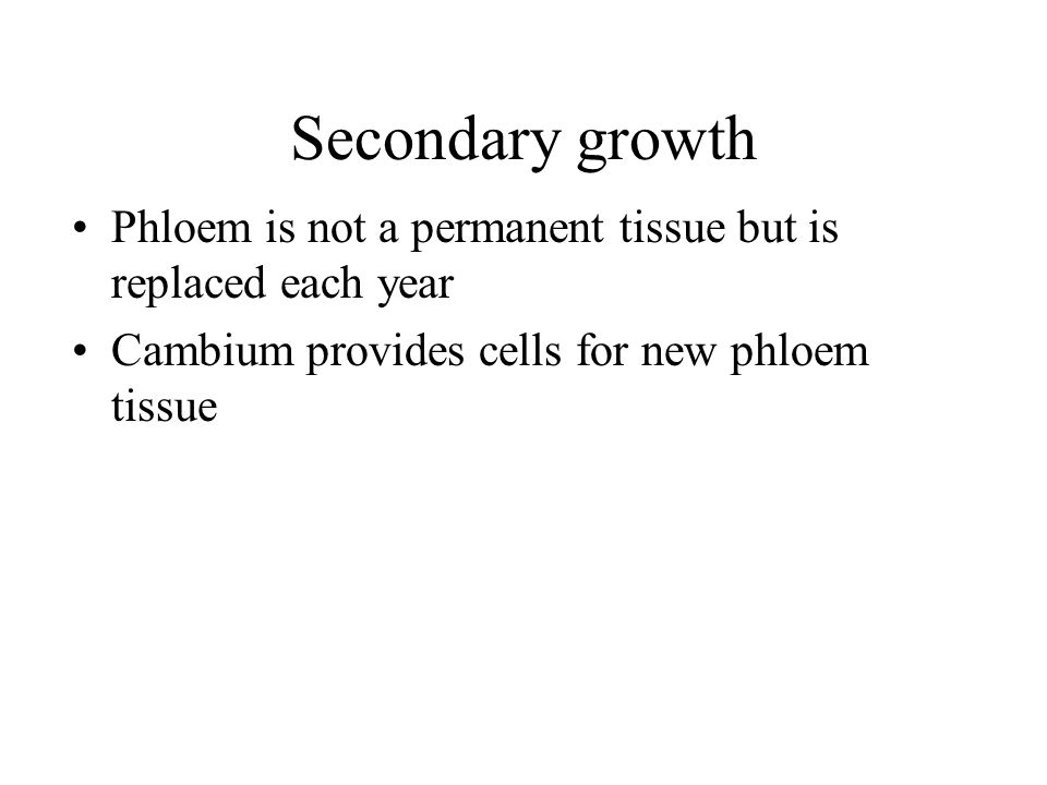 Secondary growth Phloem is not a permanent tissue but is replaced each year.