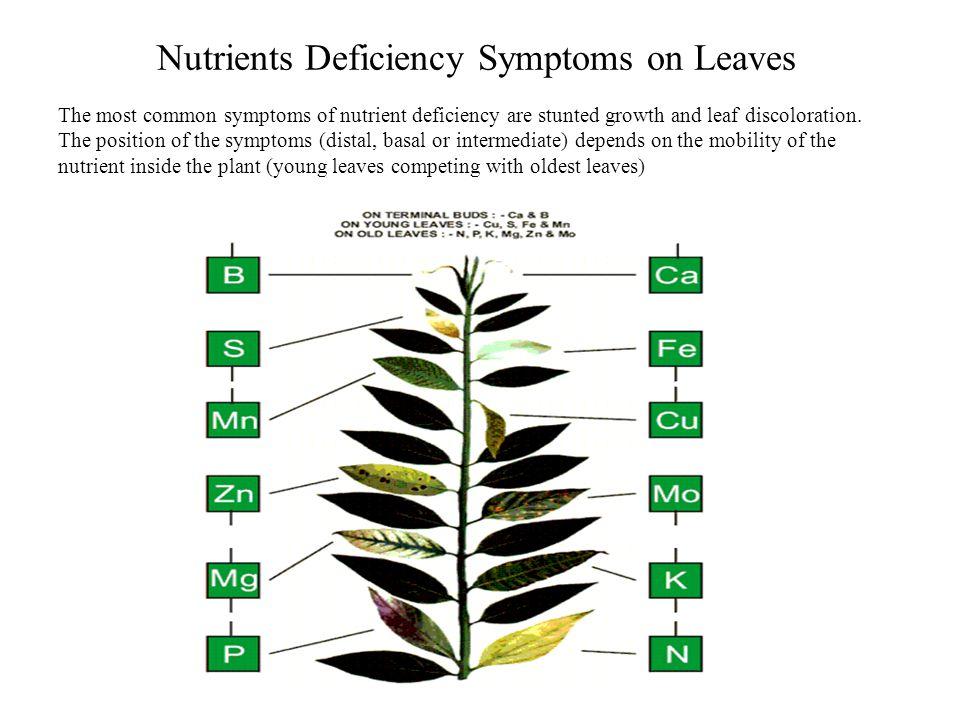 Nutrients Deficiency Symptoms on Leaves
