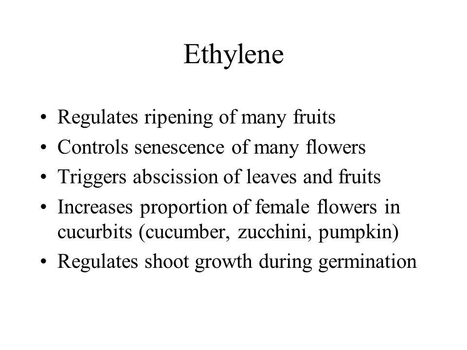 Ethylene Regulates ripening of many fruits