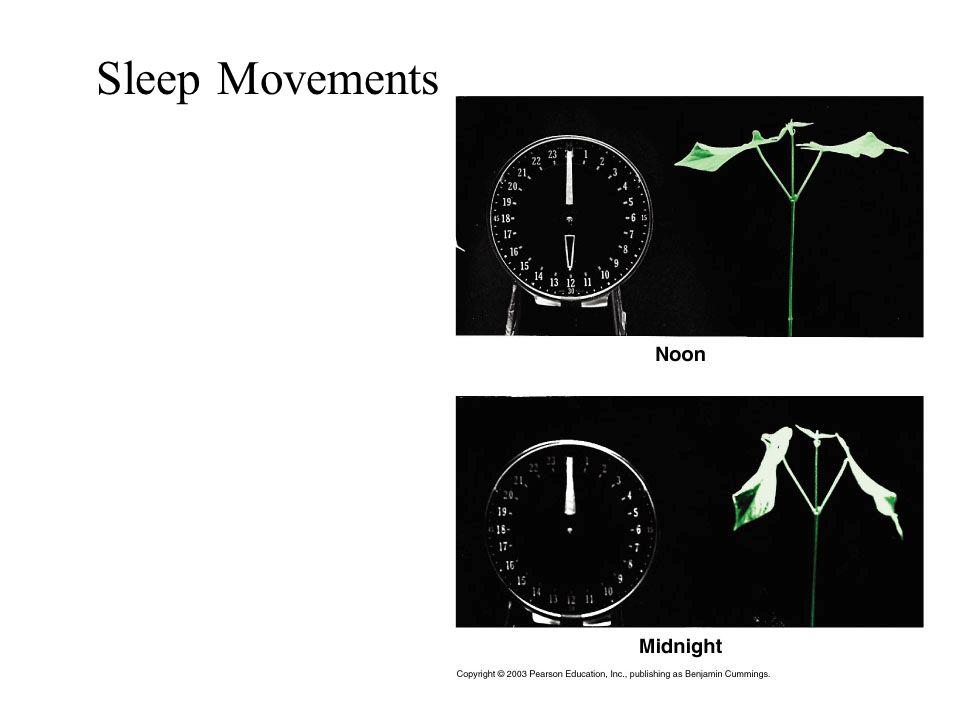Sleep Movements