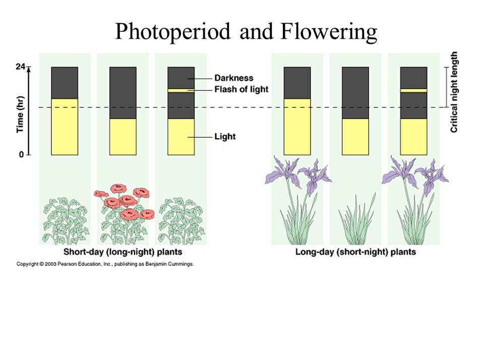Photoperiod and Flowering