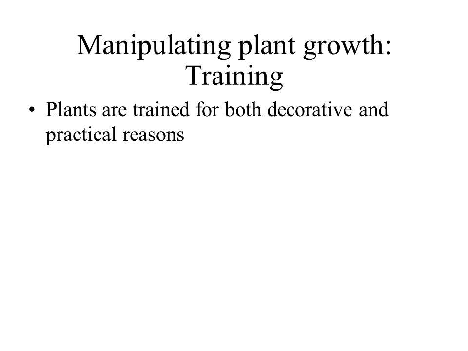 Manipulating plant growth: Training