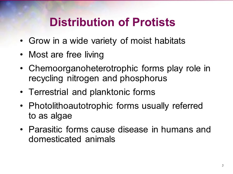 Distribution of Protists