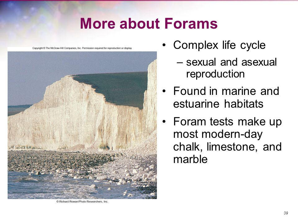 More about Forams Complex life cycle