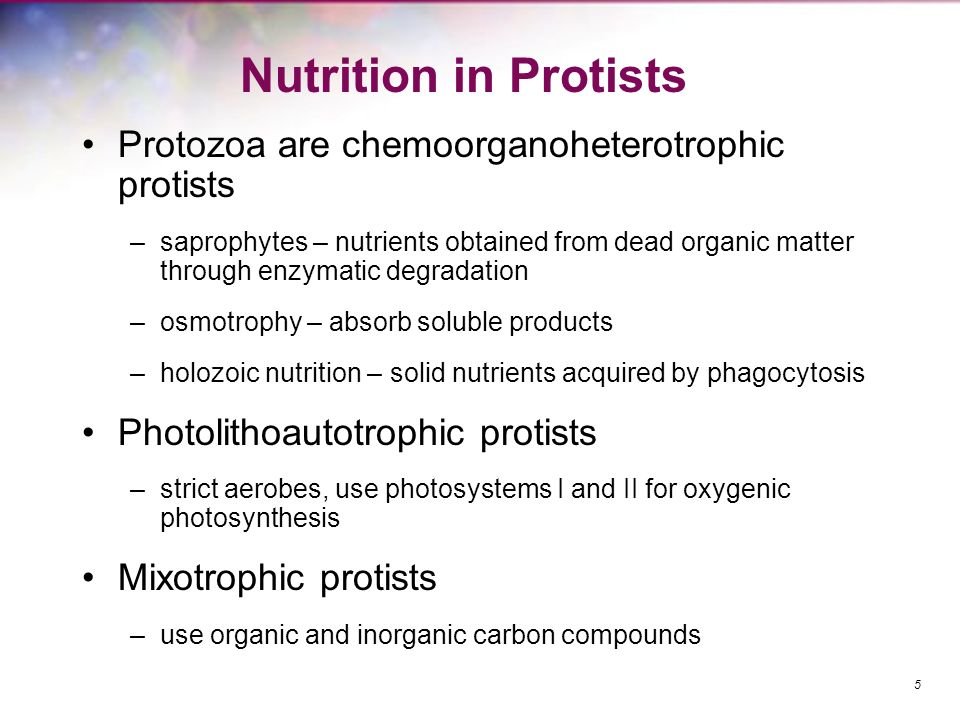 Nutrition in Protists Protozoa are chemoorganoheterotrophic protists