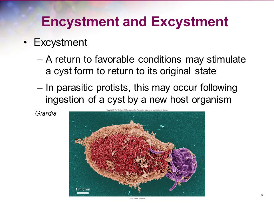 Encystment and Excystment
