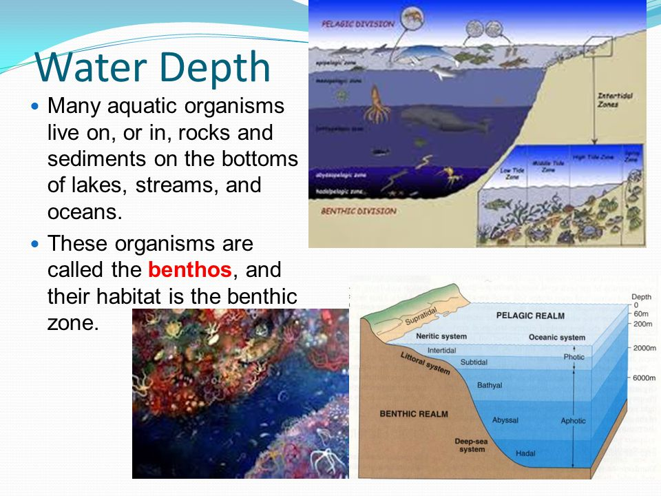 Water Depth Many aquatic organisms live on, or in, rocks and sediments on the bottoms of lakes, streams, and oceans.