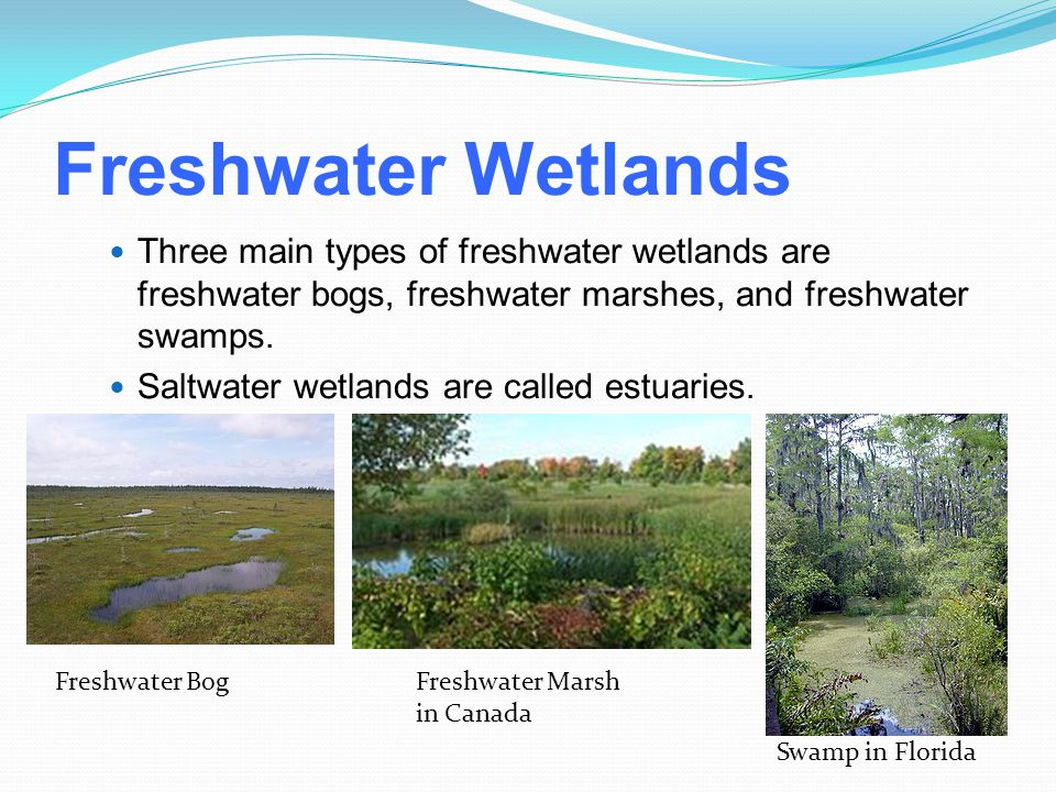 Freshwater Wetlands Three main types of freshwater wetlands are freshwater bogs, freshwater marshes, and freshwater swamps.