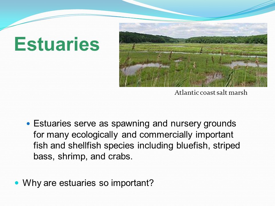 Estuaries Atlantic coast salt marsh.