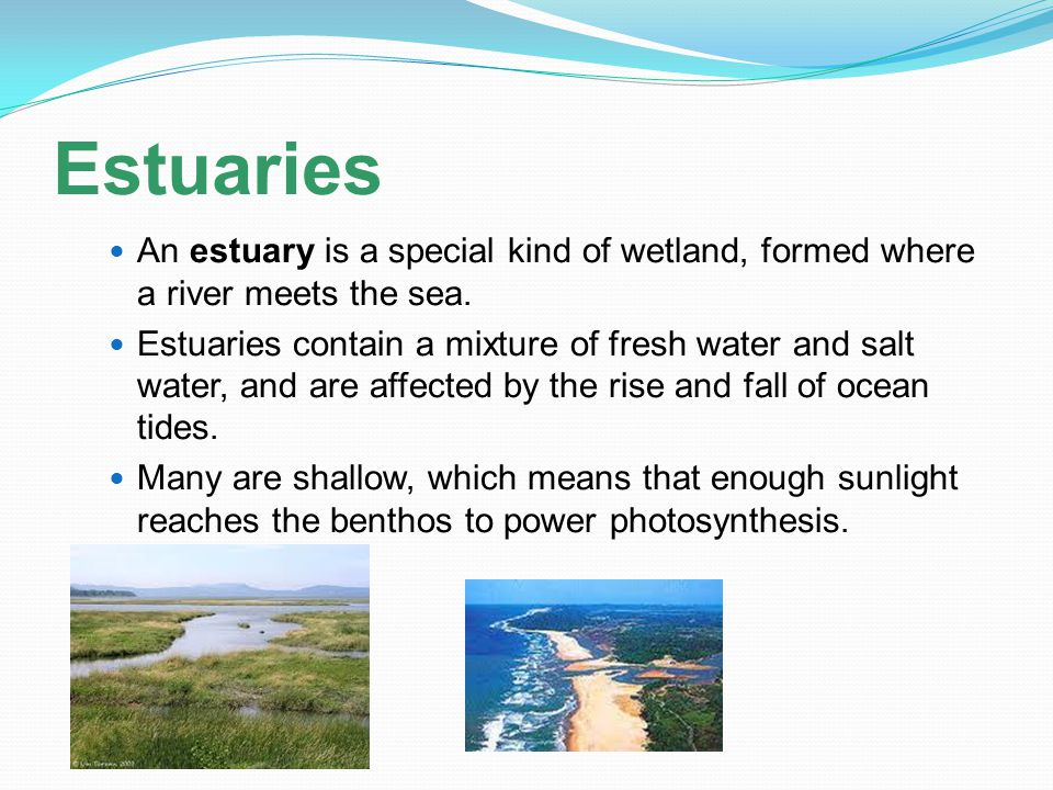 Estuaries An estuary is a special kind of wetland, formed where a river meets the sea.
